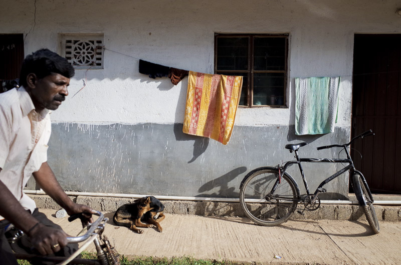 best-indian-street-photographyeveryday-life-india-cycle-dog-rest-lazy-day